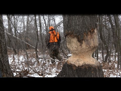 Muzzleloader Hunting In Michigan