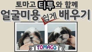 [토마고]토마고 티투 와 함께 얼굴 미용 쉽게* 배우기