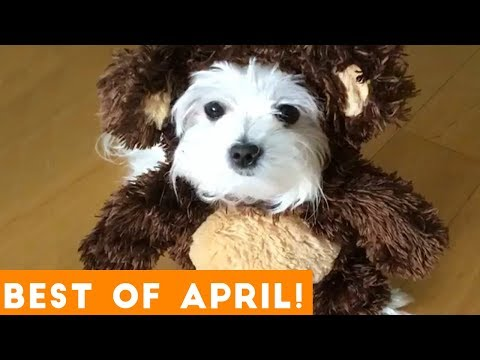 Funniest Pet Reactions & Bloopers of April 2018 | Funny Pet Videos