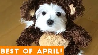 Funniest Pet Reactions \u0026 Bloopers of April 2018 | Funny Pet Videos