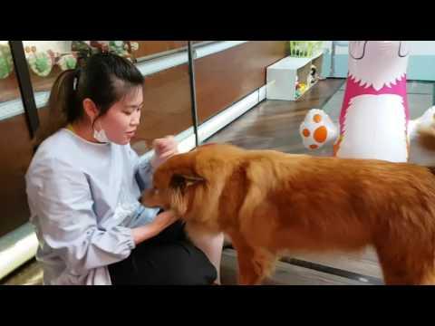 88 PETS MART [DOG HOTEL] 狗狗酒店(Petaling Jaya, Malaysia) 2017 love isn't because of the price tag