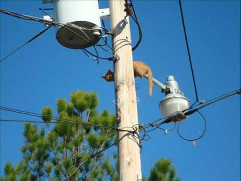 Cat climbs down telephone pole - YouTube