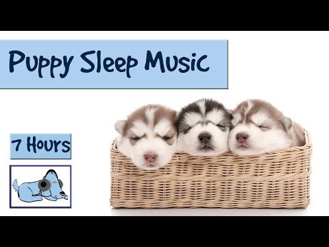 Help your Puppy go to Sleep at Night, with this 7 HOUR Song!