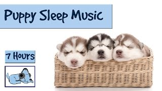 Struggling to get your puppy to sleep for long periods of time? Thi...