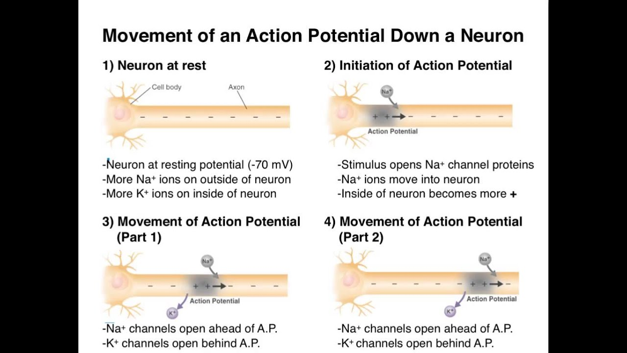 action potential 2 Action potential learning 315 likes 1 talking about this we are education specialists delivering tutoring in math, science, reading, & writing.