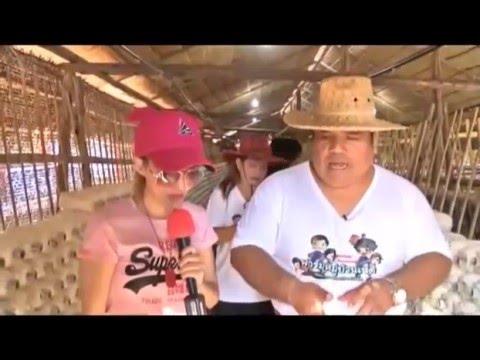 """TV 24  สถานีประชาชน """"ตะลุยฟาร์มหมู่บ้านเห็ด"""""""