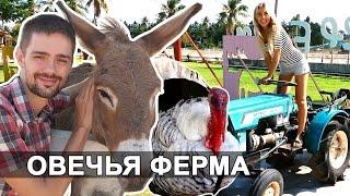 ОВЕЧЬЯ ФЕРМА В ПАТТАЙЕ - ЧАСТЬ 1 | Pattaya Sheep Farm | Тайланд ☼