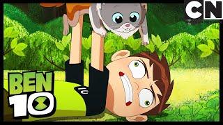Ben is Allergic to Animals | Can I Keep It? | Ben 10 | Cartoon Network