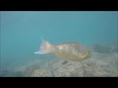Snorkeling gear rental - Galapagos Snorkeling and Diving