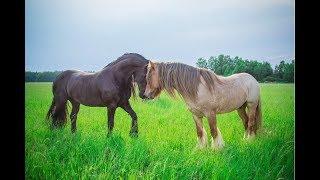 клип под песню лошадь