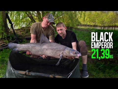 Black Emperor - Черный амур 21,39kg