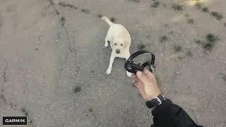 Электронный ошейник для собак.Как приучить собаку самого начала?Garmin Pro 550