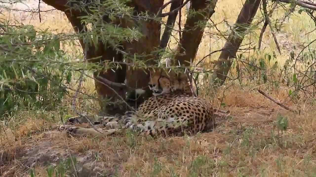 Wildlife Management Areas in Tanzania, Promoting Community Based Conservation and Livelihoods