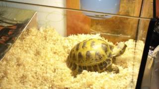 Что должно быть в первый день у сухопутной черепахи в террариуме !!!!