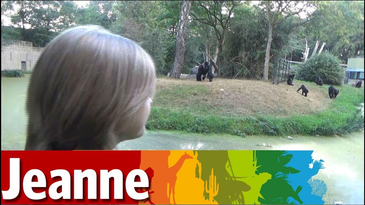 Fabel of feit: zijn Gorilla's echte bomenklimmers?