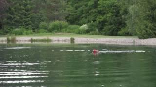 Lions Gate Kennels -  Seminole Dock Diving