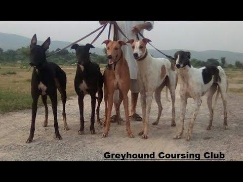Ever Shine Group | greyhound pics | greyhound kennel visits