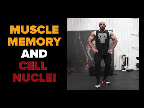 How Muscle Memory Works: Addition of Cell Nuclei