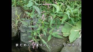 ハローアゲイン/岩波理恵/ kanna keiko cover/ 岩波理恵 動画 24
