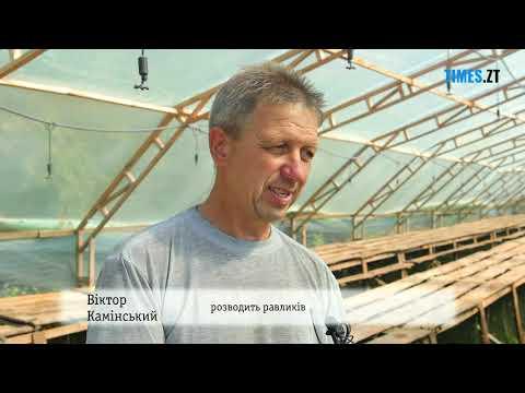 Равликова ферма у Бердичівському районі