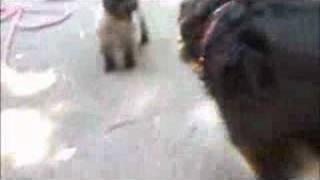 Happy Dogla Dogs