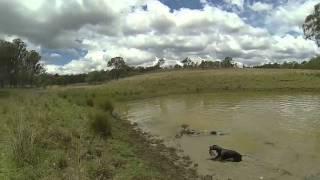 Emu Creek Dam Time