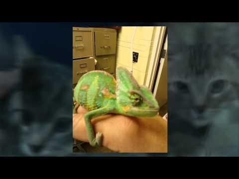 Exotic Pets Spotsylvania, VA