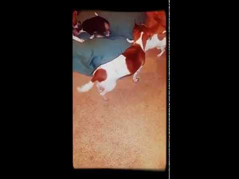 Gizmo plays with his pups