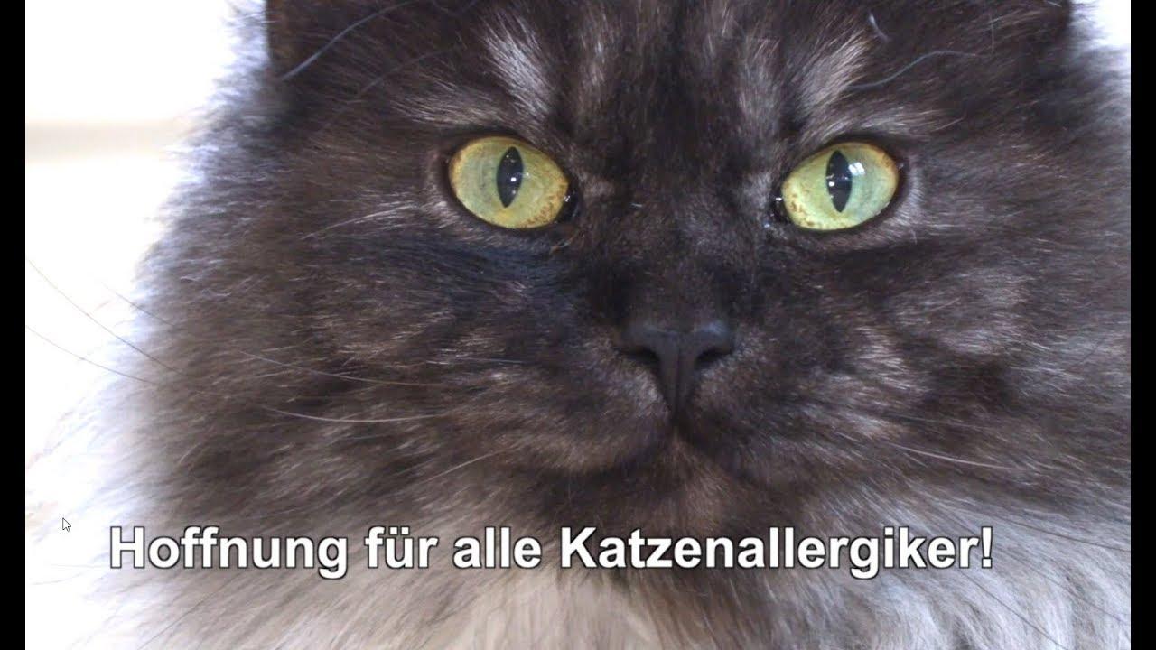 Katzenallergiker