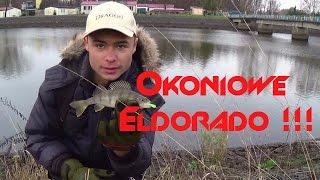 Okoniowe Eldorado !!! - 60 okoni na spinning / Płocie na baty [Elektrownia Dychów]