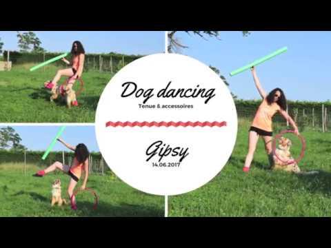 Dog dancing : tenue et accessoires - berger australien 18 mois