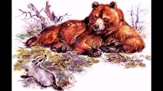 Сладков Николай Иванович – Барсук и медведь