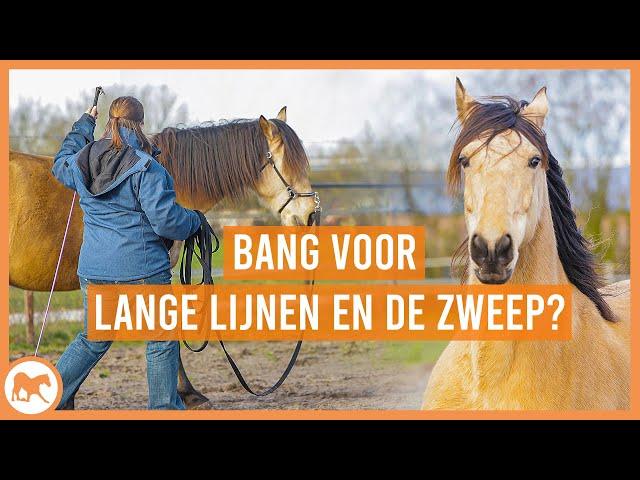 Hoe leer je jouw paard wennen aan lange lijnen?   Grondwerk
