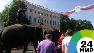 Слоны прошли по праздничному Невскому и отправились в цирк - МИР 24