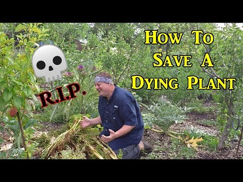 This Is Why Your Plants Are Dying | Here's What You Can Do