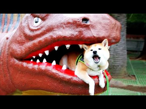 10 Minutes of Funny Dogs ★ Funny And Fails Videos