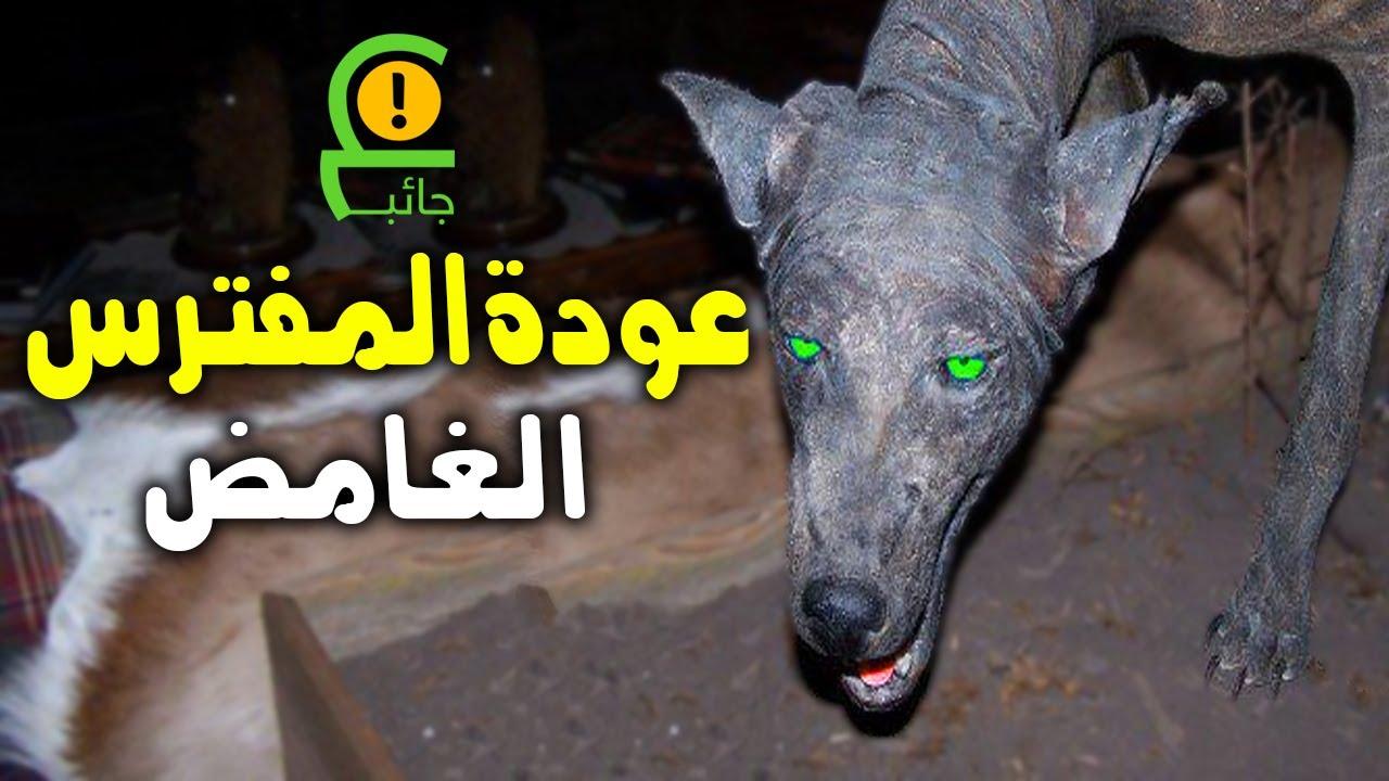 حيوان غريب يظهر في أكثر من دولة عربية لن تصدق مافعله في دولة الامارات والمغرب Youtube