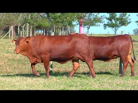 LOTE 218   ZT 2502, 2652