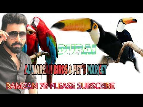 BIRDS & PETS MARKET AL WARSAN DUBAI UAE 19/05/2019