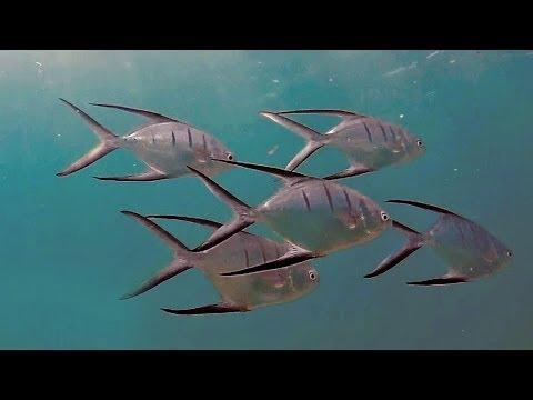 Snorkeling Ocean Reef Park | Riviera Beach / Singer Island