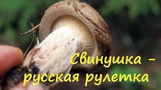 Свинушка - это русская рулетка.