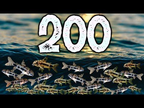 I Bought 200 Corydoras Catfish