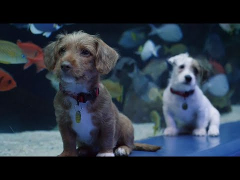 Puppies Explore Georgia Aquarium While it's Closed