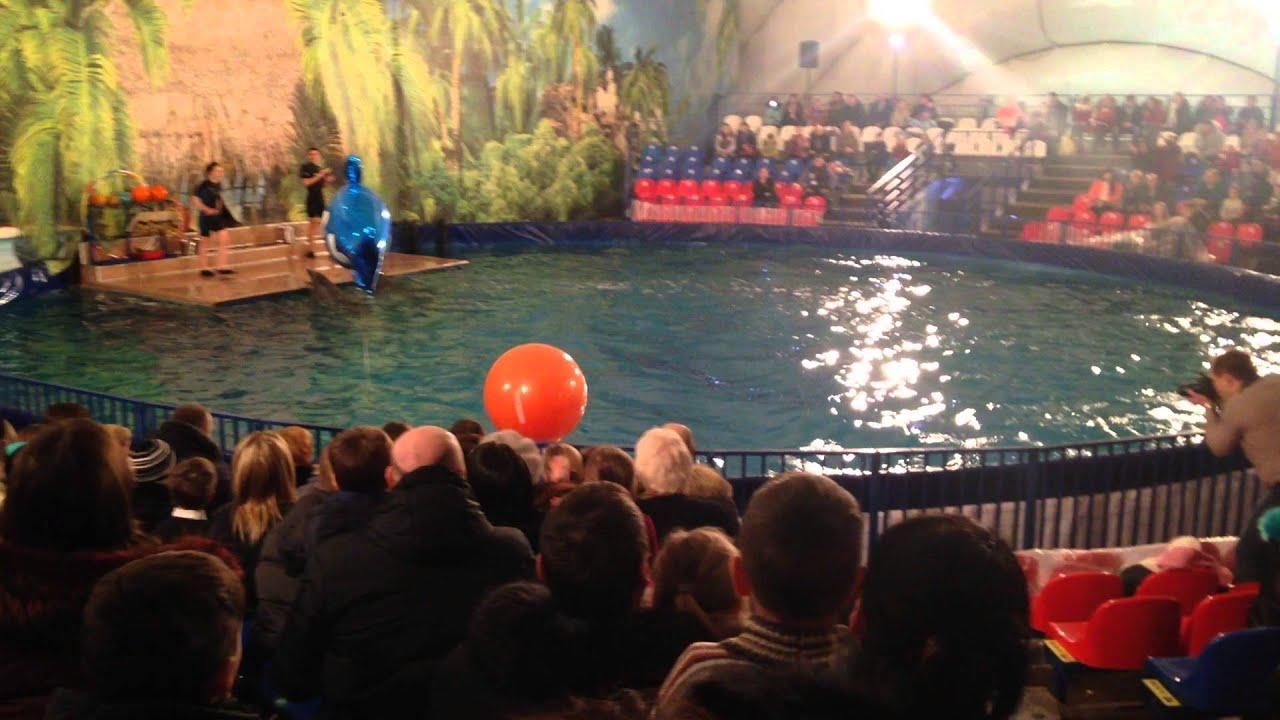 дельфинарий в рязани фото дворце располагаются музей