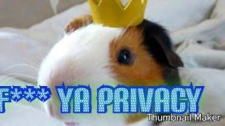 ILLYMATION f*** ya privacy