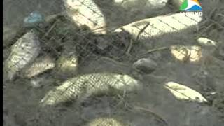 Fish farm, Thrissur
