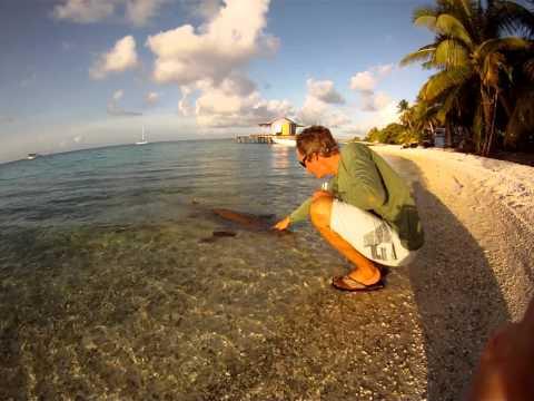 Petting Valerie the Nurse Shark at Apataki, Tuamotus, French Polynesia
