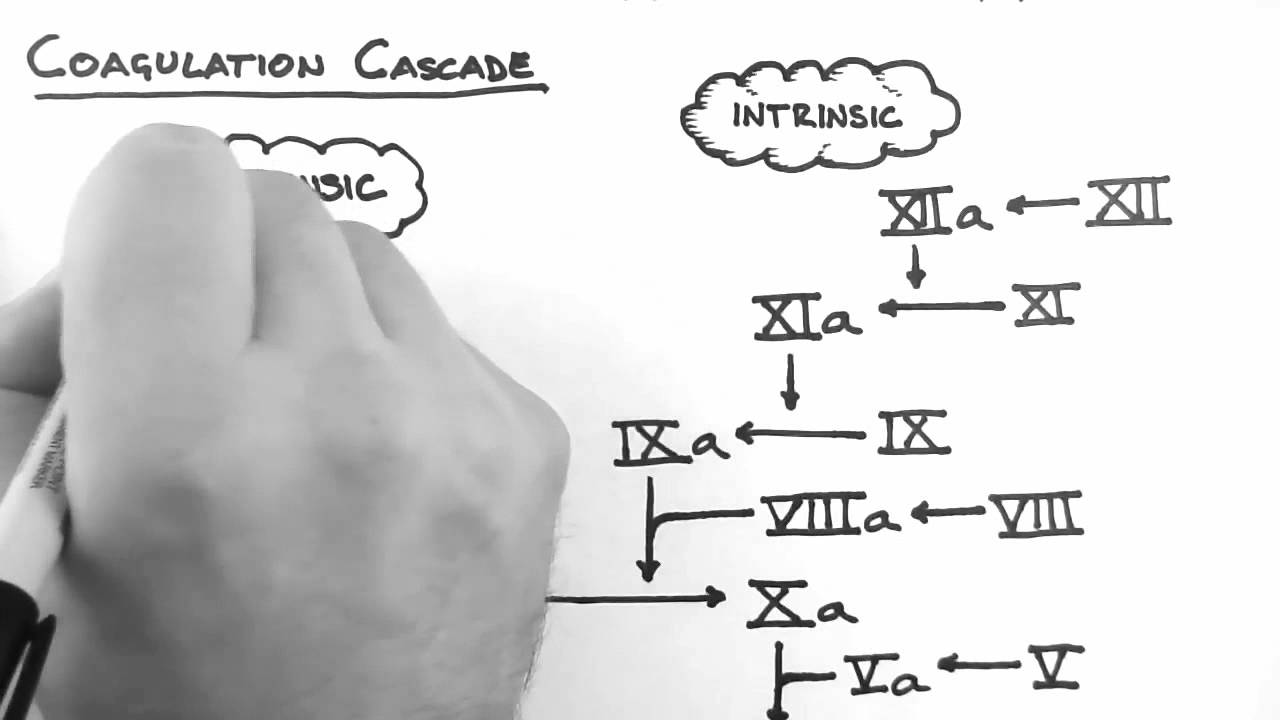 Haemostasis 2 - Coagulation Cascade - YouTube
