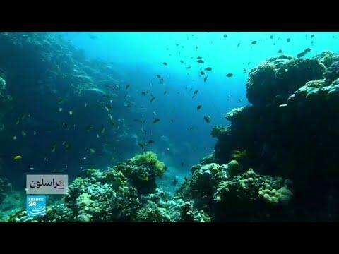 لحماية المرجان في البحر الأحمر  - نشر قبل 23 دقيقة