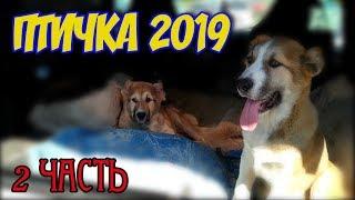 Птичий рынок Харьков Украина апрель 2019! Собачки, кошечки, хомячки и немного рыбок!